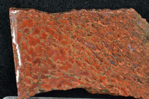 Red Orange Agatized Dinosaur Bone Slab Utah 30 grams