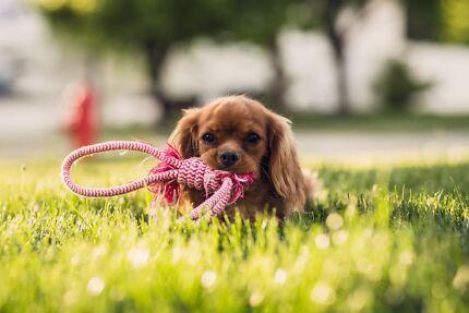 Doggo | Dog Walking Melbourne