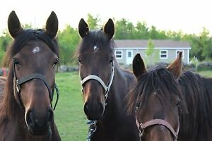 Mares for sale