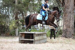 Dream eventer Lysterfield Yarra Ranges Preview