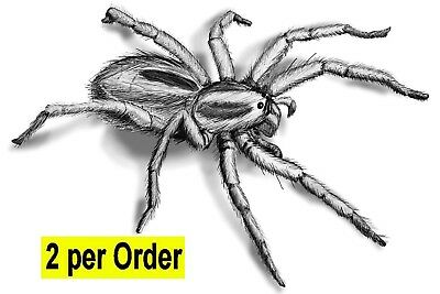Spider 2 Temporary Tattoos Hairy Big 3D Halloween Transfers Waterpoof Arachnid