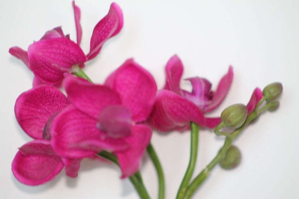 Fake pink flowers home dcor accents moncton kijiji listing item mightylinksfo