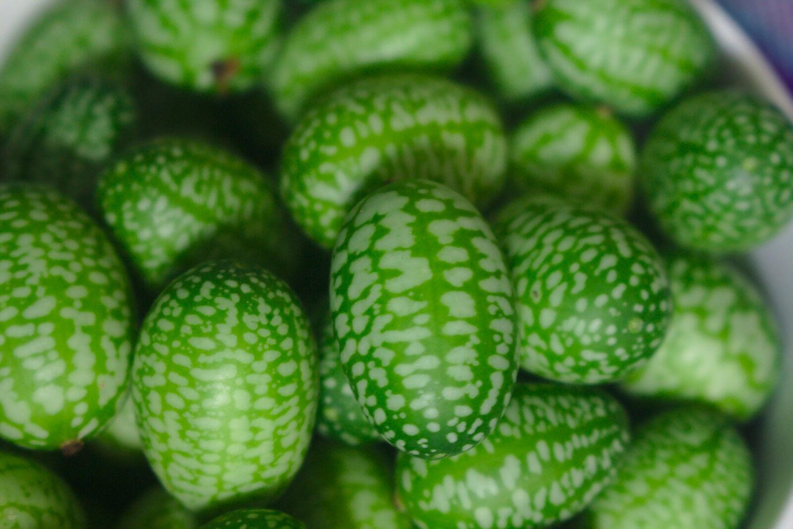 15 Samen Mexikanische Mini Gurken Melothria scabra Wassermelonen-Gurke Cucamelon