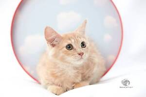 RescueCat Project - Jemima Annandale Leichhardt Area Preview
