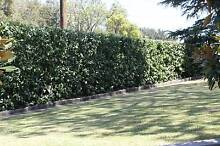 Lawnmowing, Hedging and Gardening Services Epping Ryde Area Preview