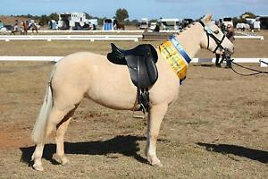 Reg palomino Australian pony mare for sale Bullengarook Macedon Ranges Preview