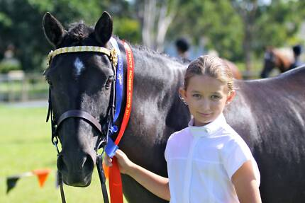 Ultimate beginner Pony Bonogin Gold Coast South Preview