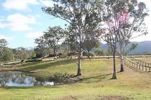 Agistment - Perfect Horse Country! Samford Valley Brisbane North West Preview