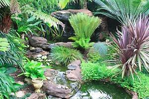 Prestige Landscape Maintenance and Reticulation Banora Point Tweed Heads Area Preview
