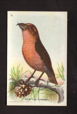 American Crossbill  1934 Church   Dwight Useful Birds Of America Card