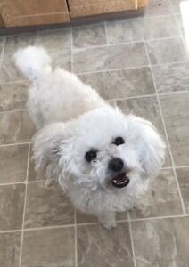 Pet sitter available in Dartmouth