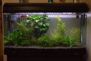 Aqua One 980 fish tank inclusive fish and plants Hornsby Hornsby Area Preview
