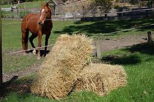 High quality pasture hay Mount Evelyn Yarra Ranges Preview