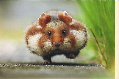 Klappkarte mit Umschlag: ein Hamster hat's eilig - running hamster - de luxe Klappe Hat