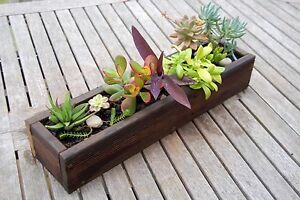 Planter Box with Succulents North Sydney North Sydney Area Preview