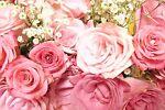 Julia*s Rose Petals & Potions
