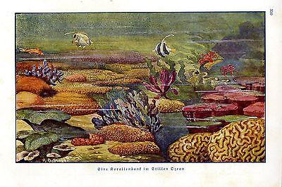 R. Oeffinger Eine Korallenbank im Stillen Ozean Fische Histor. Bilddokument 1929