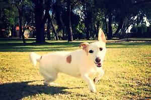 Anna's Pet Sitting Parmelia Kwinana Area Preview