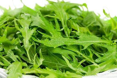 Mustard Mizuna Non GMO Heirloom Japanese / Asian Vegetable Seeds Sow No GMO USA