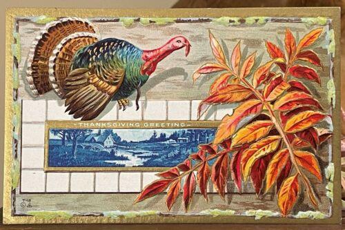 Colorful Antique Thanksgiving Turkey Postcard Mint Unused