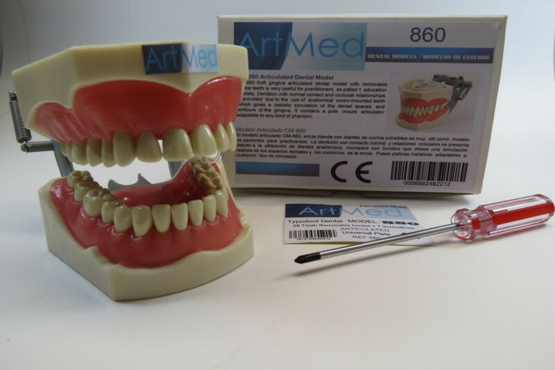 Dental Typodont Model 860 Universal Plate Columbia Compatible ARTMED