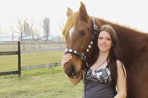 Horse for lease/part-lease