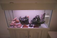 Amazing Fish Tank (including cabinet with lighting hood) Scarborough Stirling Area Preview