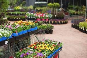Massive Nursery! A Grade Plants! Big Range! Springwood Logan Area Preview