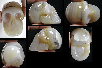 Dendritic Agate CRYSTAL SKULL w/ Gorgeous Banding - S15983