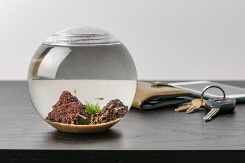 Self sustaining shrimp sphere aquarium premium with shrimp full ecosystem SALE