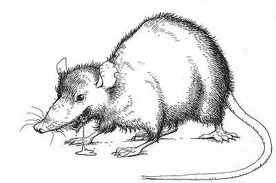 Smetch Rats