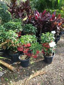 MASSIVE PLANT SALE FROM $5 Glenview Caloundra Area Preview