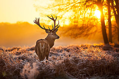 """STAG  IN MISTY FOREST SUNRISE SUNSET canvas 24""""x30"""