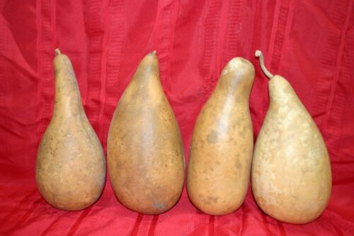 PENGUIN/POWDER HORN OR TALL BODY GOURDS GROUP OF 4 LARGE