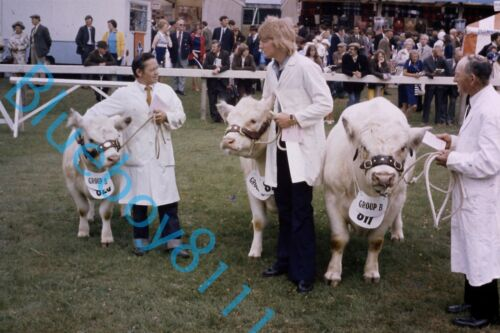 Beef Cattle Judging Yorkshire Show in 1970