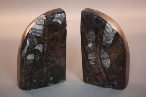 SET OF POLISHED FOSSIL BOOKENDS