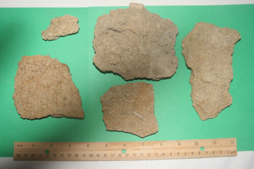 Bryozoan & crinoid mixed Pennsylvanian period fossil sea slabs