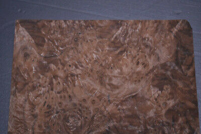Walnut Burl Raw Wood Veneer Sheets 8 X 12 Inches 142nd Thick  Ifpa7369-19