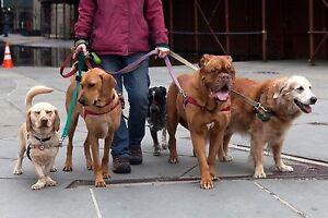 **DOG WALKING** Wilmot  Kitchener / Waterloo Kitchener Area image 1