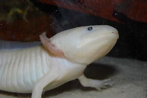 Looking for  *TWO* 40 gallon tanks! London Ontario image 1