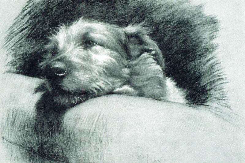 Irish Wolfhound Dog Cecil Aldin 1930