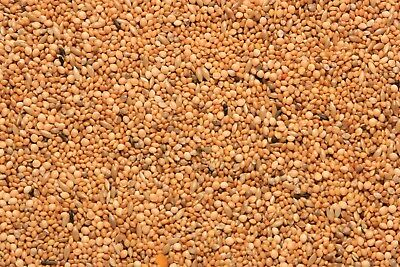 SkyGold Special Foreign Finch Bird Food Seed Mix 20 Kg