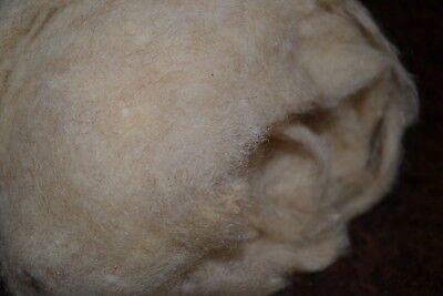 kardierte Wolle in naturbeige als 500g Vlies vom Coburger Fuchsschaf