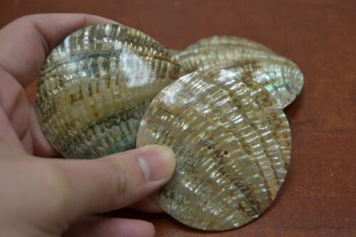 2 PCS ROUND ABALONE SHELL BLANK TWO HOLE SEWING BUTTONS 70MM #T-447