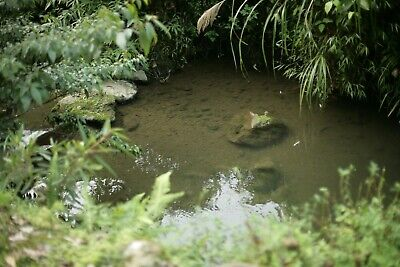 Small Wildlife Pond Kit pond liner pond underlay fleece and solar oxygenator