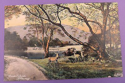 Dinis Island, Killarney - Original Vintage Postcard