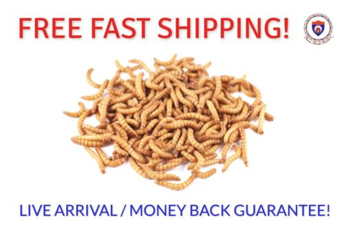 Live Mealworms - Organically Raised - ALL COUNTS / SIZES - Free Shipping!!!