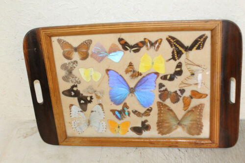 "Vintage Art Deco Butterfly Wing & Wood Inlay Tray 20"" x 13"""