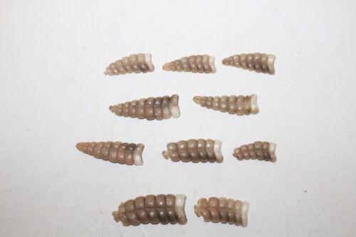 10 Rattlesnake rattles    6F08   side winder sidewinder diamondback diamond back