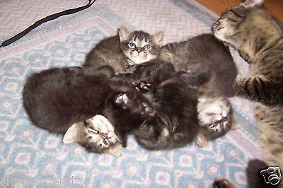 HELP MOM CAT LITTER OF KITTENS REC PHOTO BENEFITS FERAL CAT RESCUE NON PROFIT